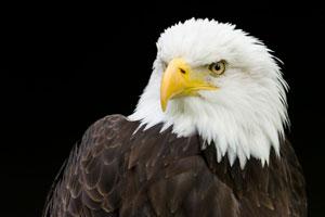 Persönlicher Tipp des Ökonomiehofs Klosterlangheim: Der Wildpark Tambach mit spannender Greifvogelvorführung