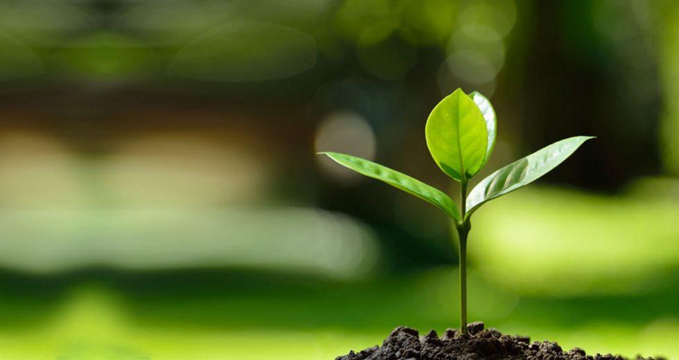 Ein neuer Baum für jede Online-Buchung bei Bauernhofurlaub.de – wir unterstützen den Klimaschutz!
