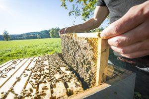 Dein perfekter Bauernhoftag auf dem Imkerhof im Frühling