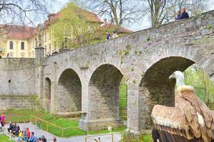 Persönlicher Tipp der Familie Mohr vom Mohrenhof Franken: Spannender Ausflug zum Fürstlichen Falkenhof Schloss Schillingsfürst