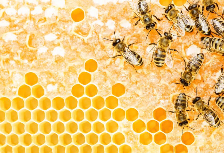 Bienen auf der Bienenwabe