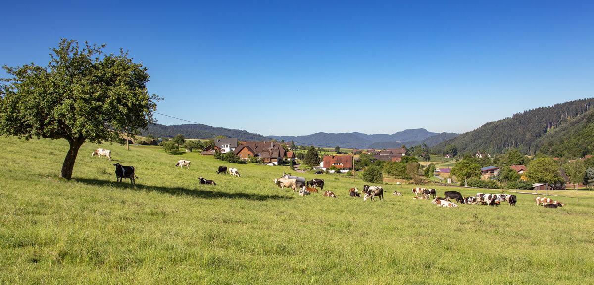 Kühe auf der Weide - © Lunzenhof