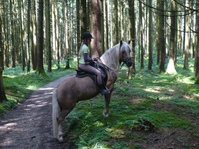 Unvergessliche Reiterferien im Herbst erleben auf dem *****Fürstnerhof am Chiemsee