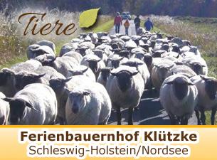 Weitere Informationen zum Ferienbauernhof Klützke