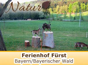 Ferienhof Anna und Alois Fürst