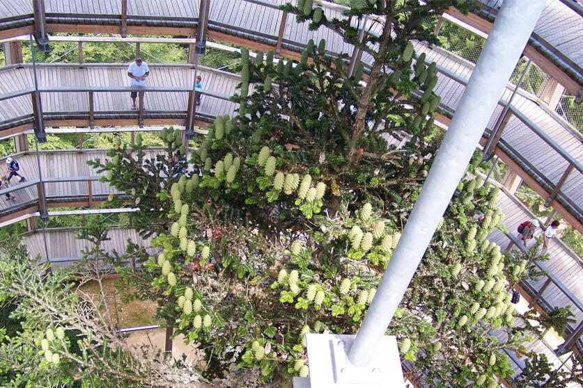 Der Baumwipfelpfad nahe des Ferienbauernhofs Kilger