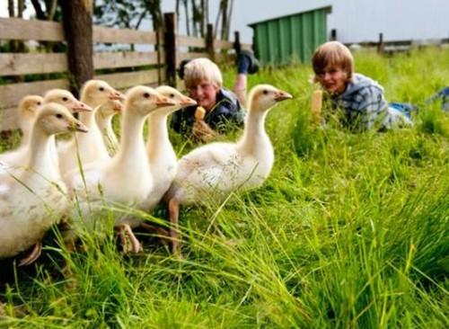 Nordseestrandferien und Bauernhofurlaub auf dem Ferienhof Wulff