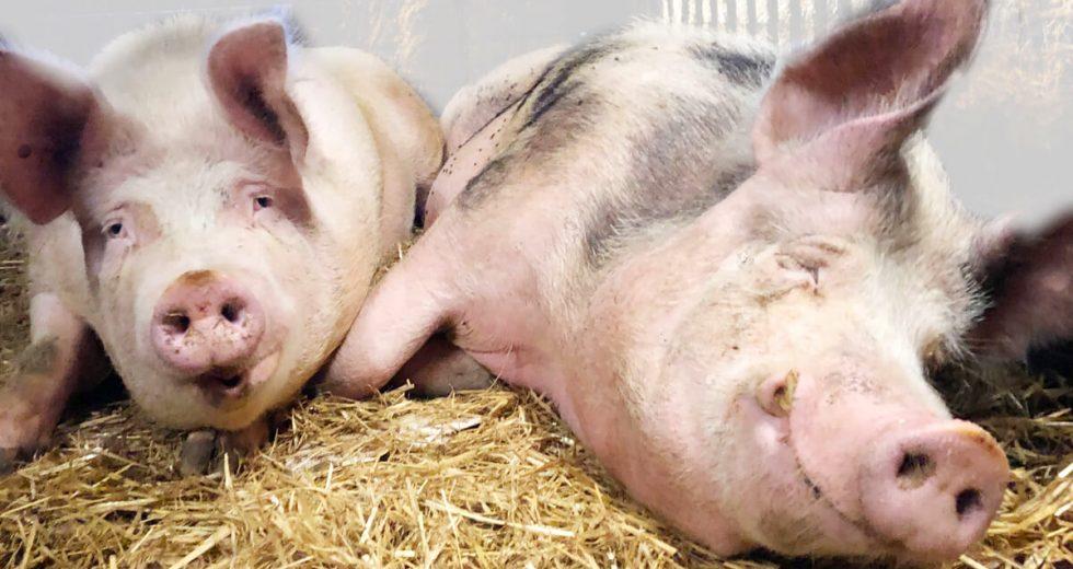 Ferienhof Henning Ommen – Bauernhofurlaub der Extraklasse an der Nordsee!