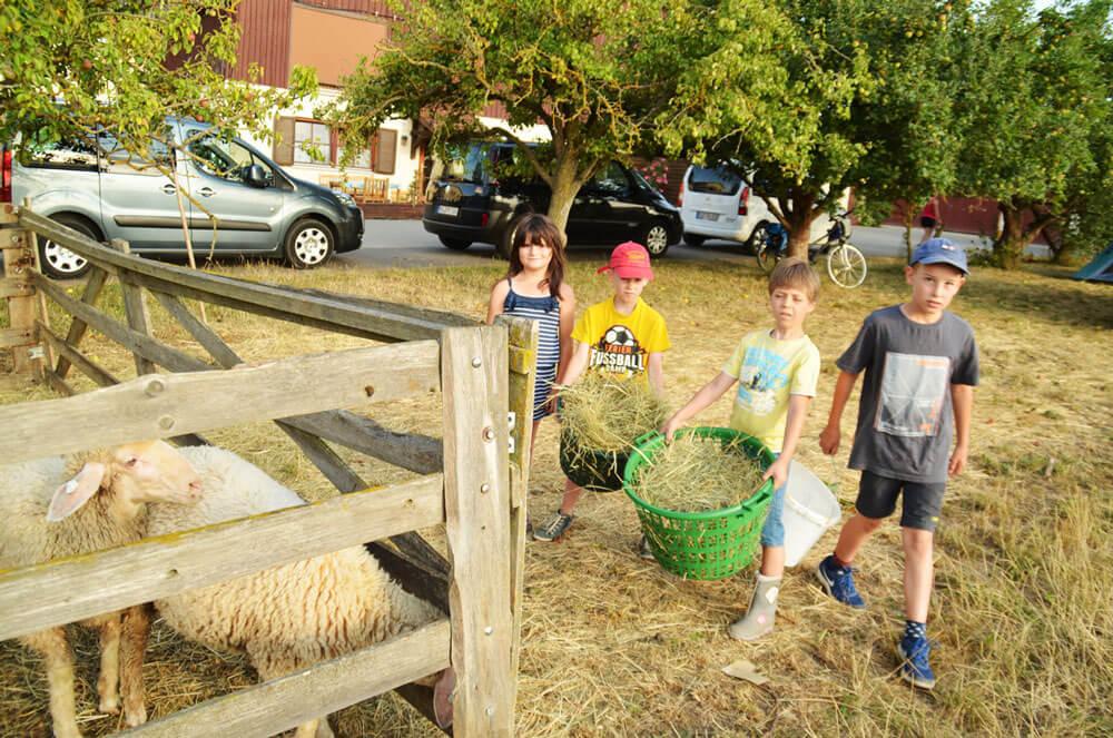 Wichtige Aufgabe am Hof: die Tiere füttern - © Schmidts Ferienhof