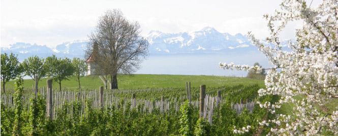 Heimat auf Zeit am Bodensee