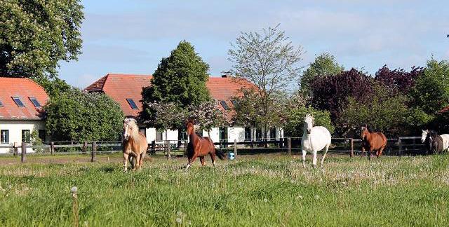 Hofbild mit Ponys