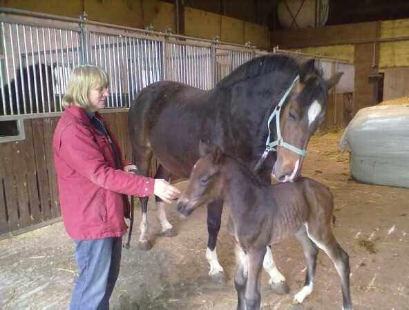 Im Pferdestall auf dem Ferienhof Seelust der Familie  Hinz
