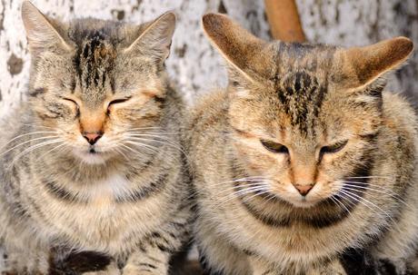 Katzen im Doppelpack