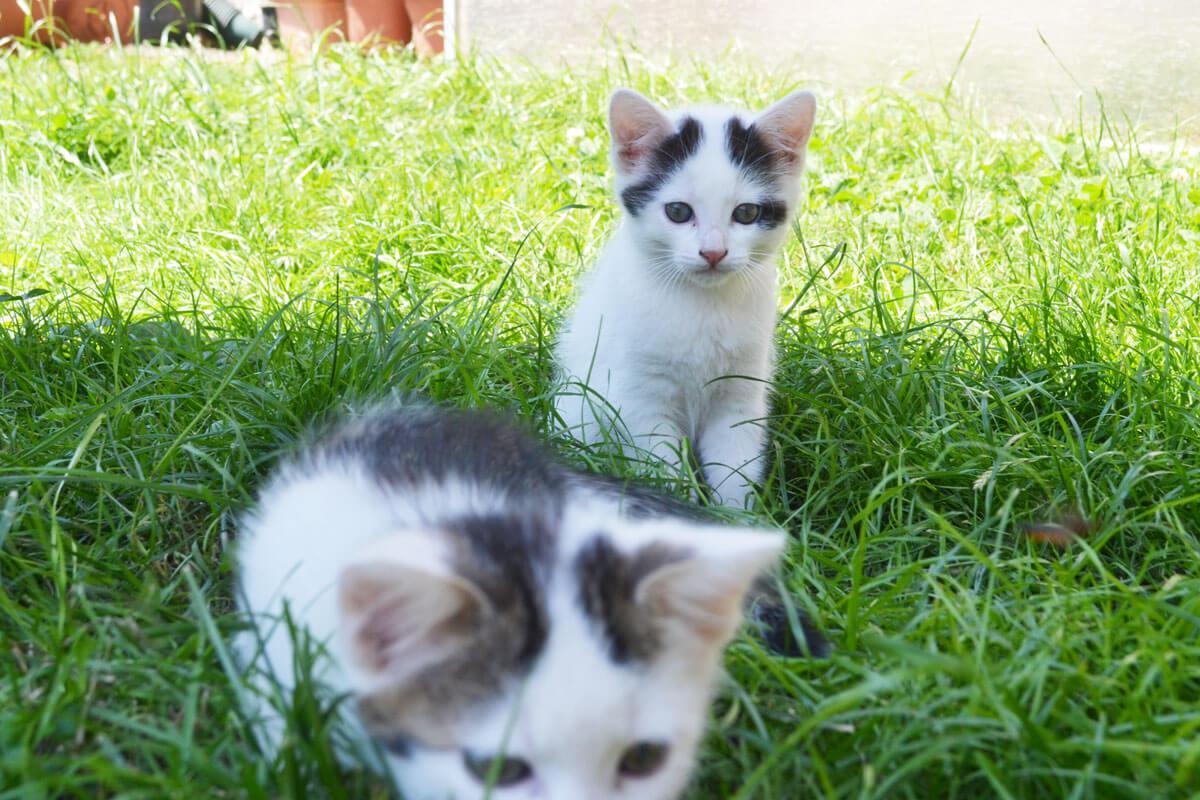 Neugierige Katzenkinder