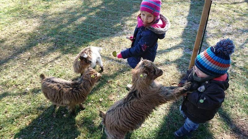 Süße Ziegen auf dem Hof