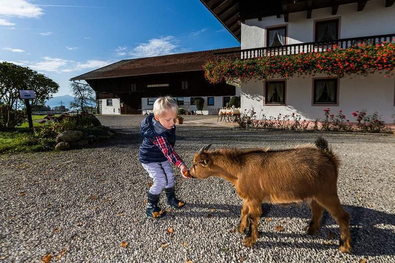Unvergesslich schöne Bauernhof-Erlebnisse