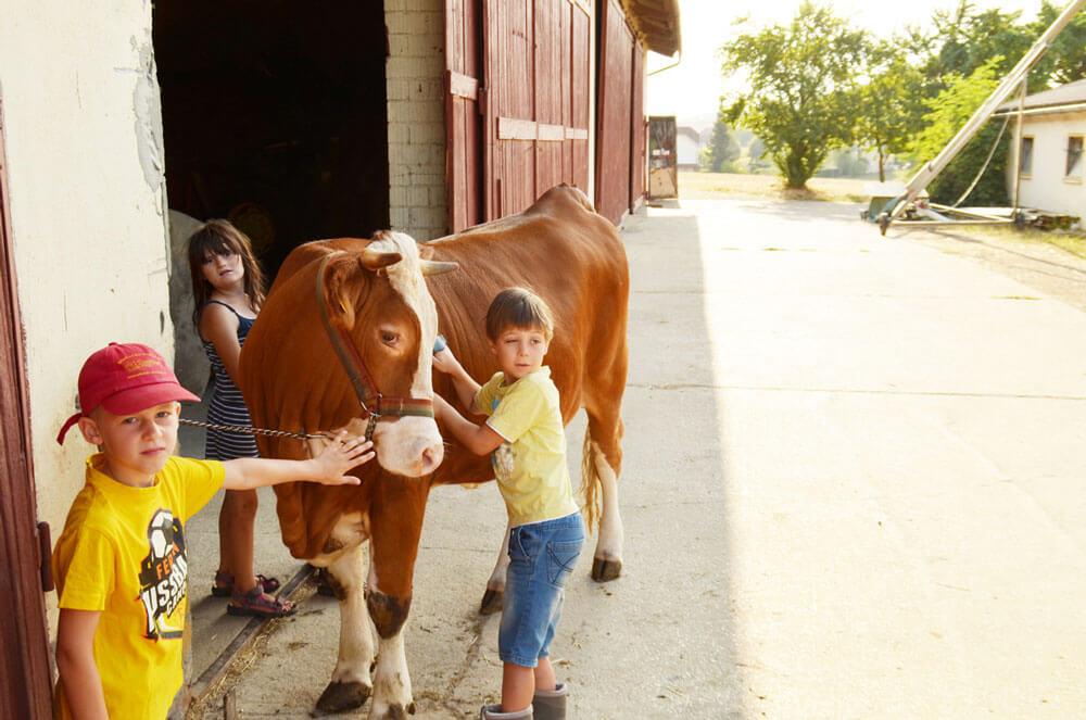 Unsere Kühe werden auch sehr gerne gestriegelt - © Schmidts Ferienhof