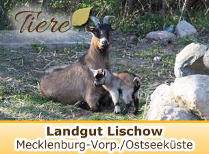 Weitere Informationen zum Landgut Lischow