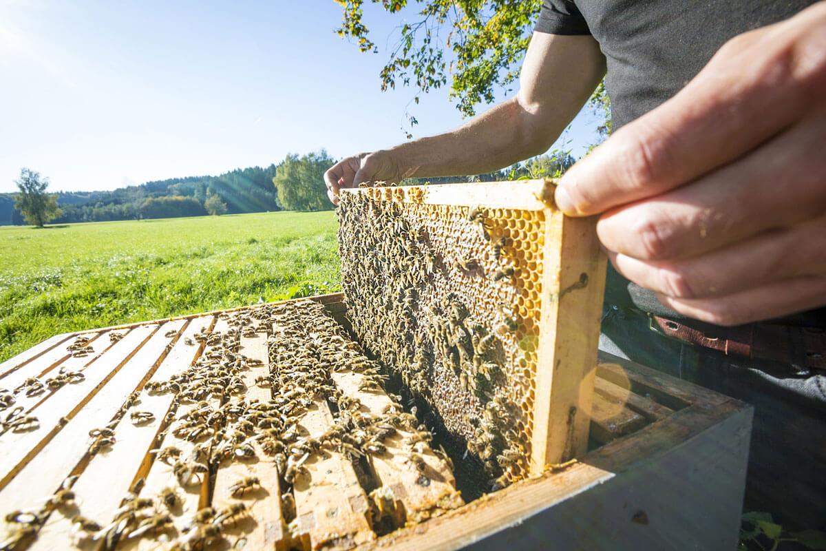 Ein Sonnenplatz für die fleißigen Bienen