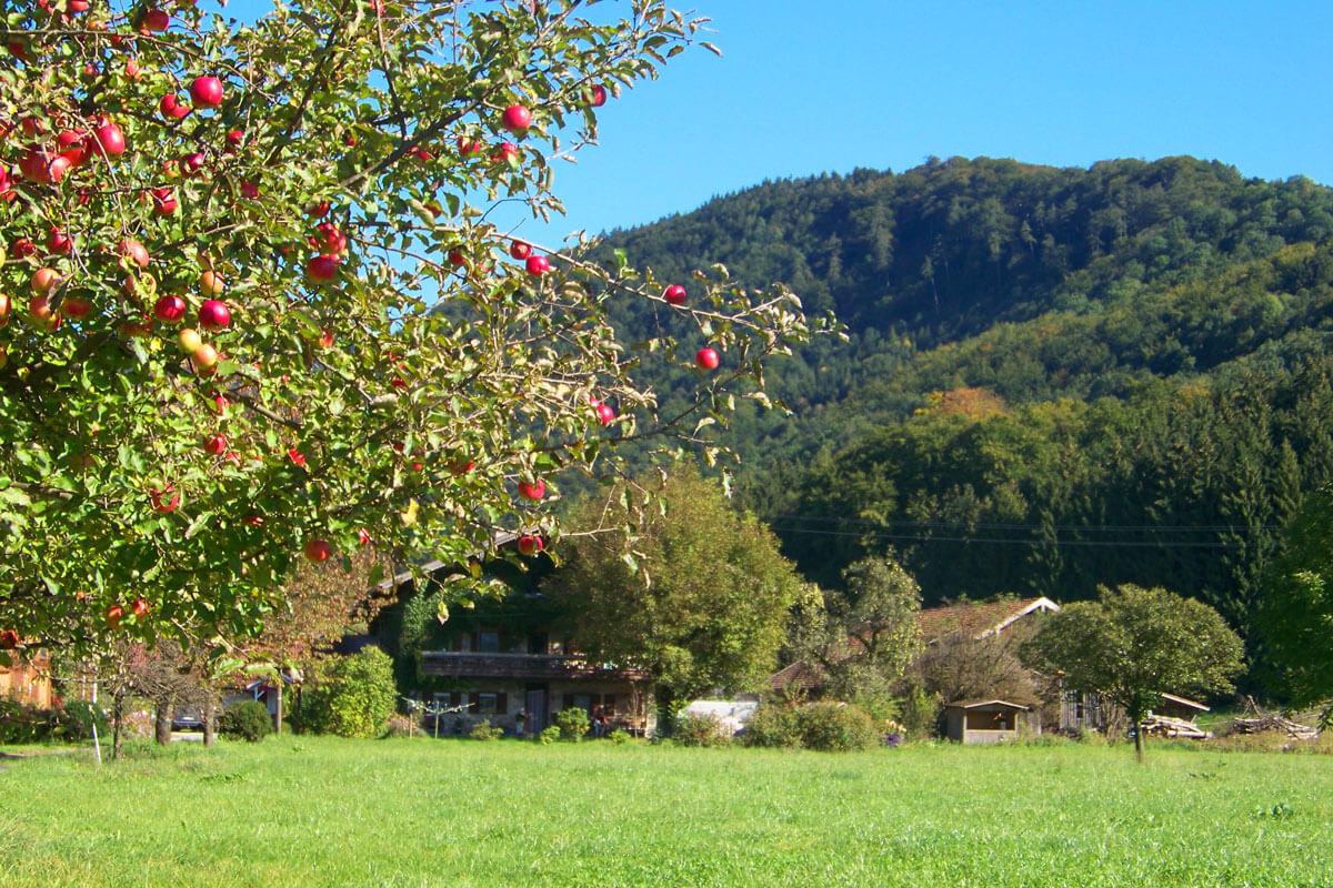 Weitläufiger Garten mit Obstbäumen