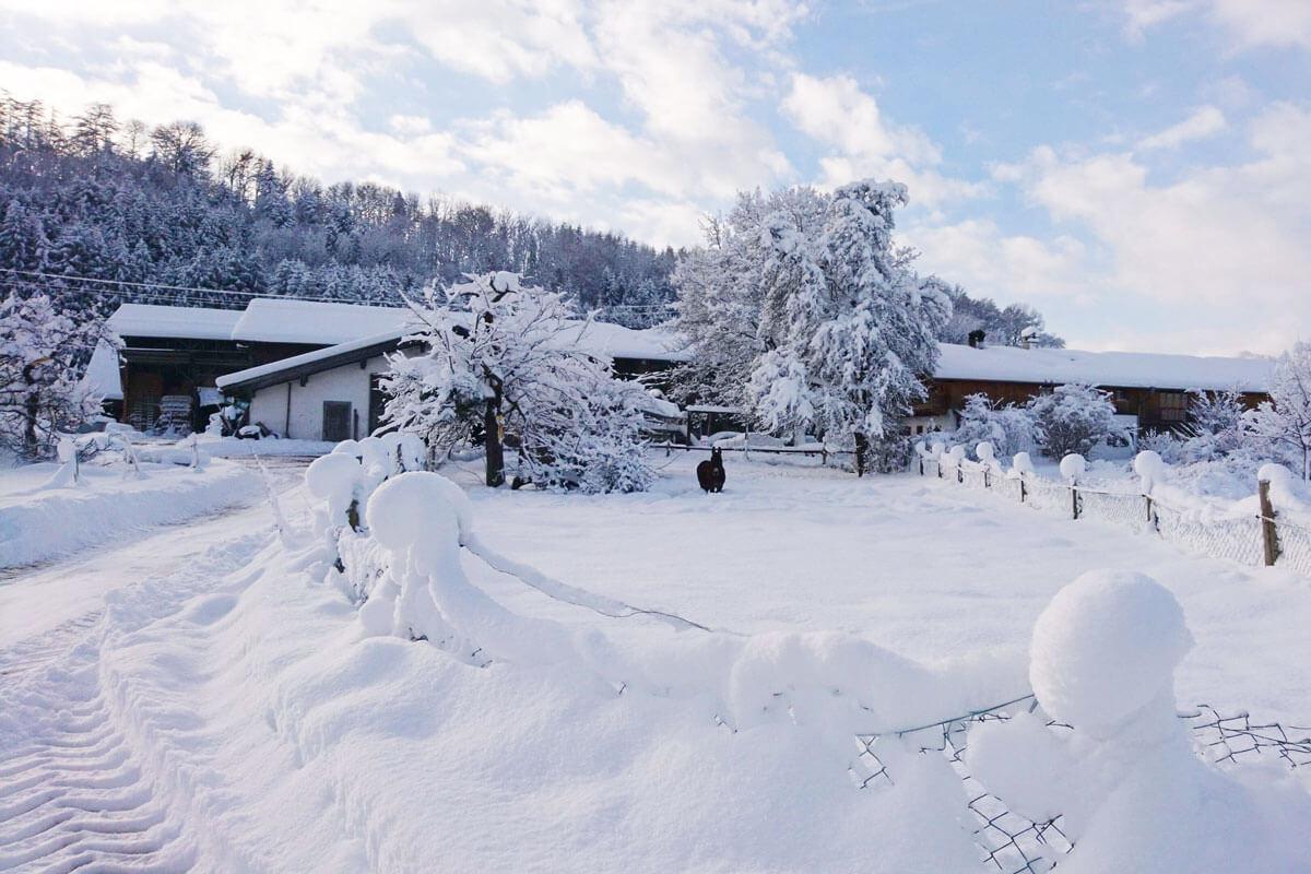 Winter am Hof - © Niederauer Hof