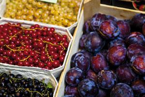 Was macht ein Obstbauer eigentlich im Winter?