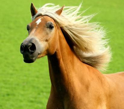 Pferde am Bucherhof