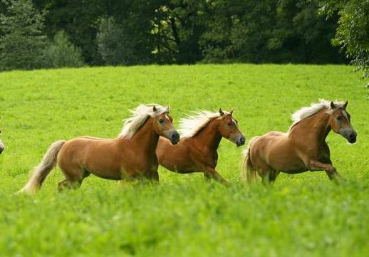 Kleine Pferdeherde
