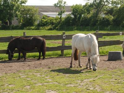 Pferde Büdlfarm