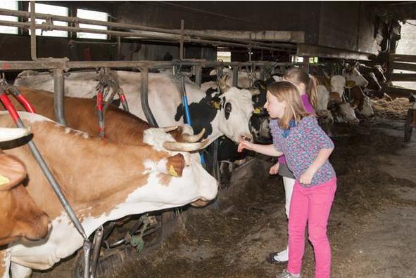 Auf Tuchfühlung mit Kühen
