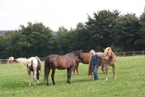 Pferde auf dem Ferienhof-Meisburg