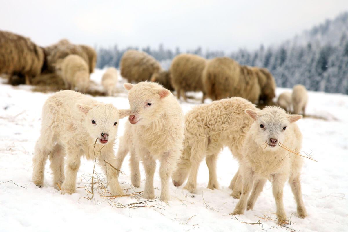 Die schönsten Ferienhöfe im Winter